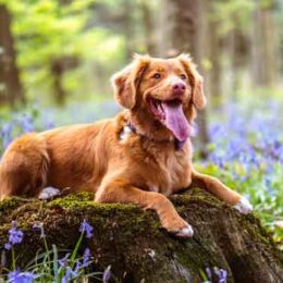 Cooling Panting Dogs