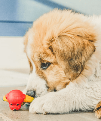 Dogs love to be treated to toys